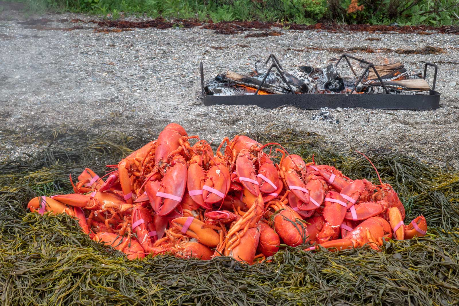 Lobster Boil Burnt Island Maine
